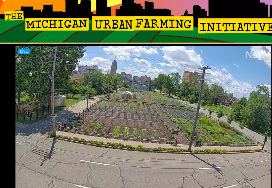 Cover Crops and Compost May Be Key To Improved Soils for Urban Agriculture
